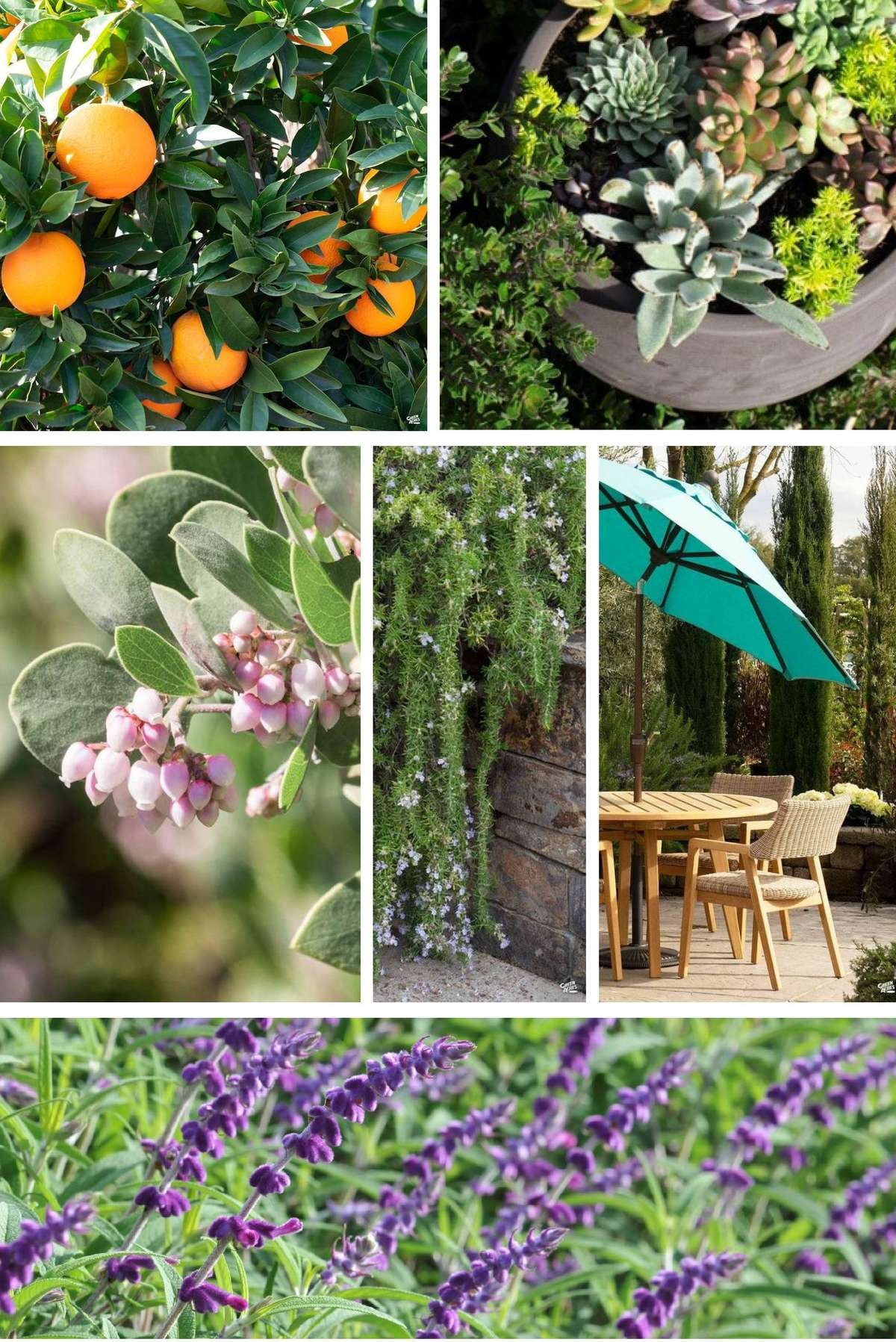 Collage of Images : Citrus, Succulent Bowl, Rosemary, Manzanita, Mexican Sage, Outdoor Dining Set