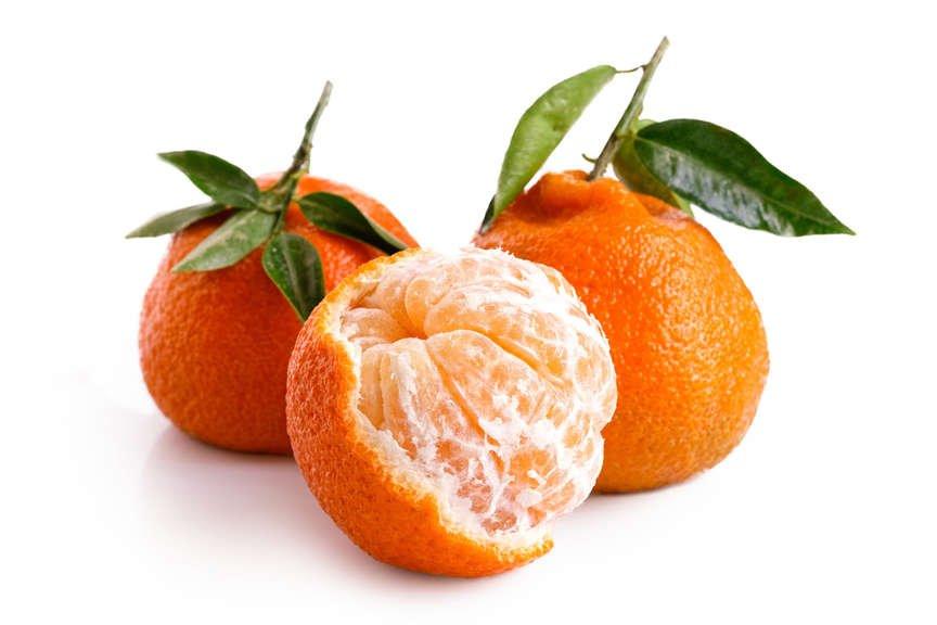 Mandarin 'Satsuma Owari'