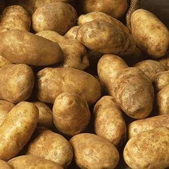 Russet Goldrush Potato