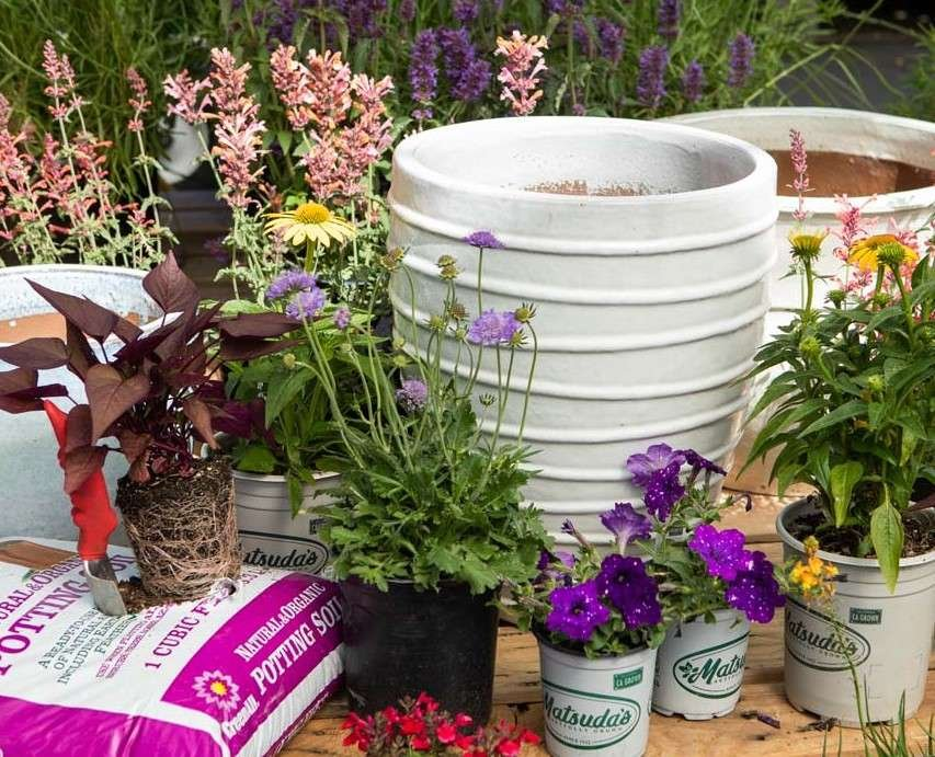 White Pottery with Flowering Perennials