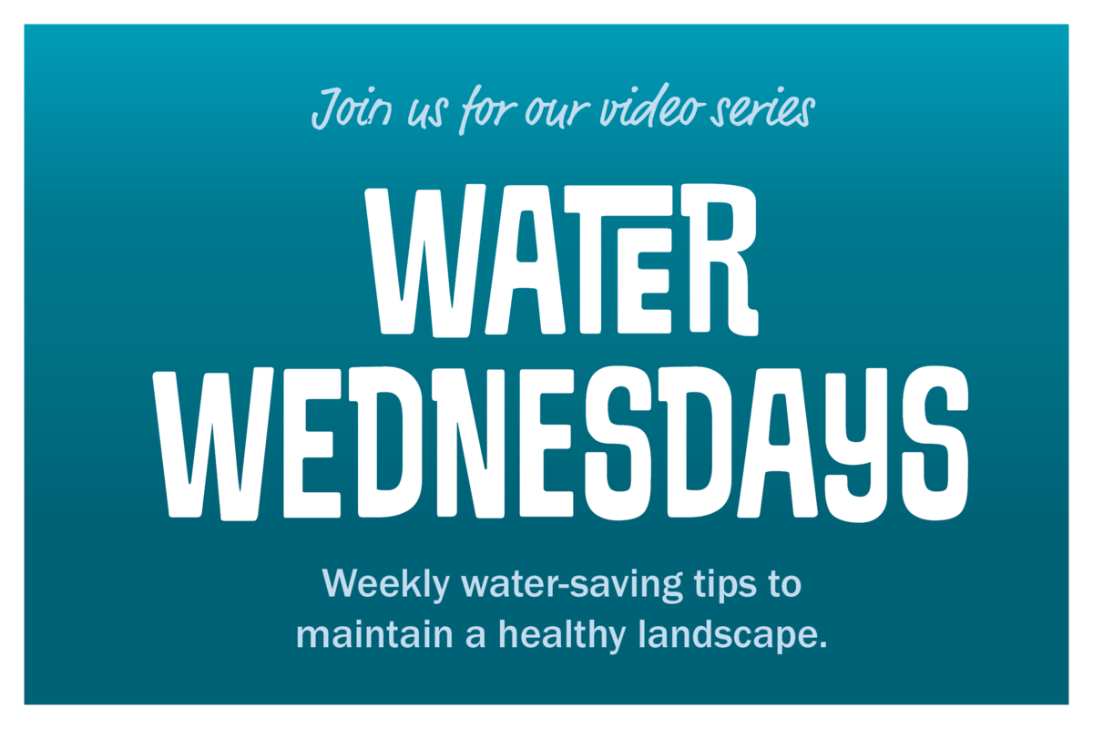 Join us for our video series Water Wednesdays. Weeklywater-saving tps to maintain a healthy landscape.