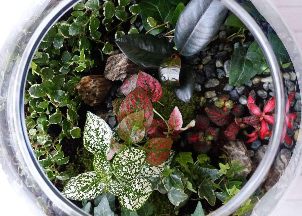 Planted Terrarium