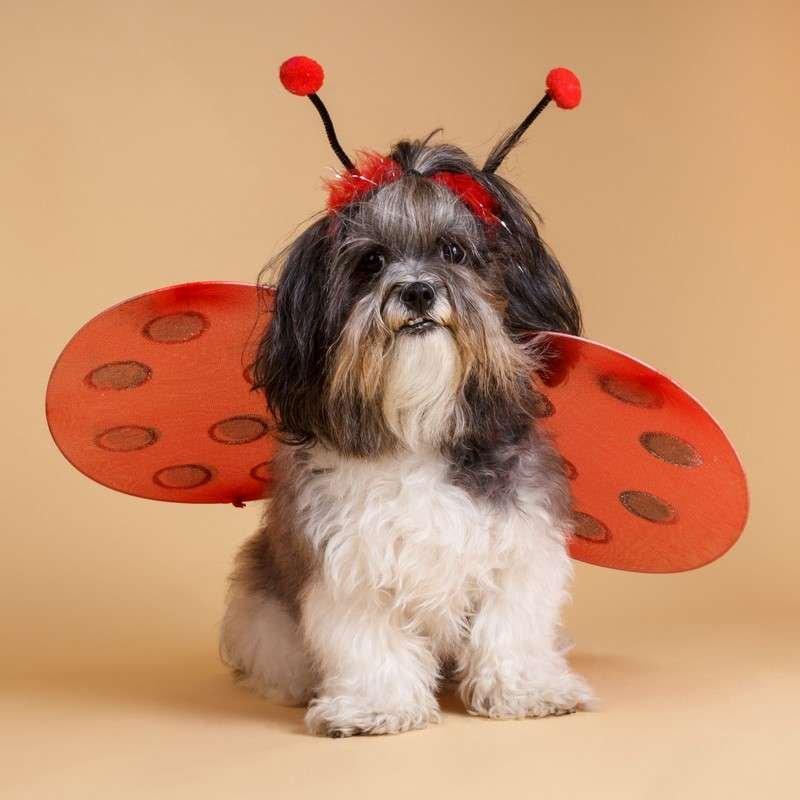 Dog in ladybug costume