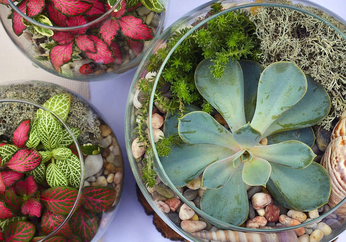 Three Planted Terrariums