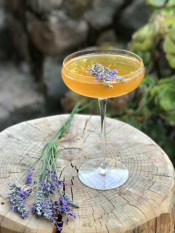 The Honey Bee Cocktail