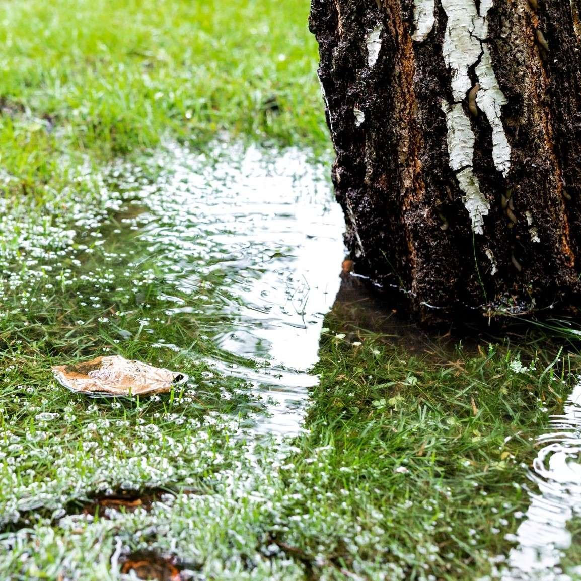 Base of Tree in Puddle of Water
