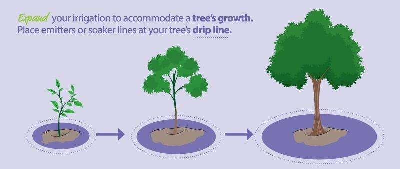 Irrigation Diagram for Watering Trees