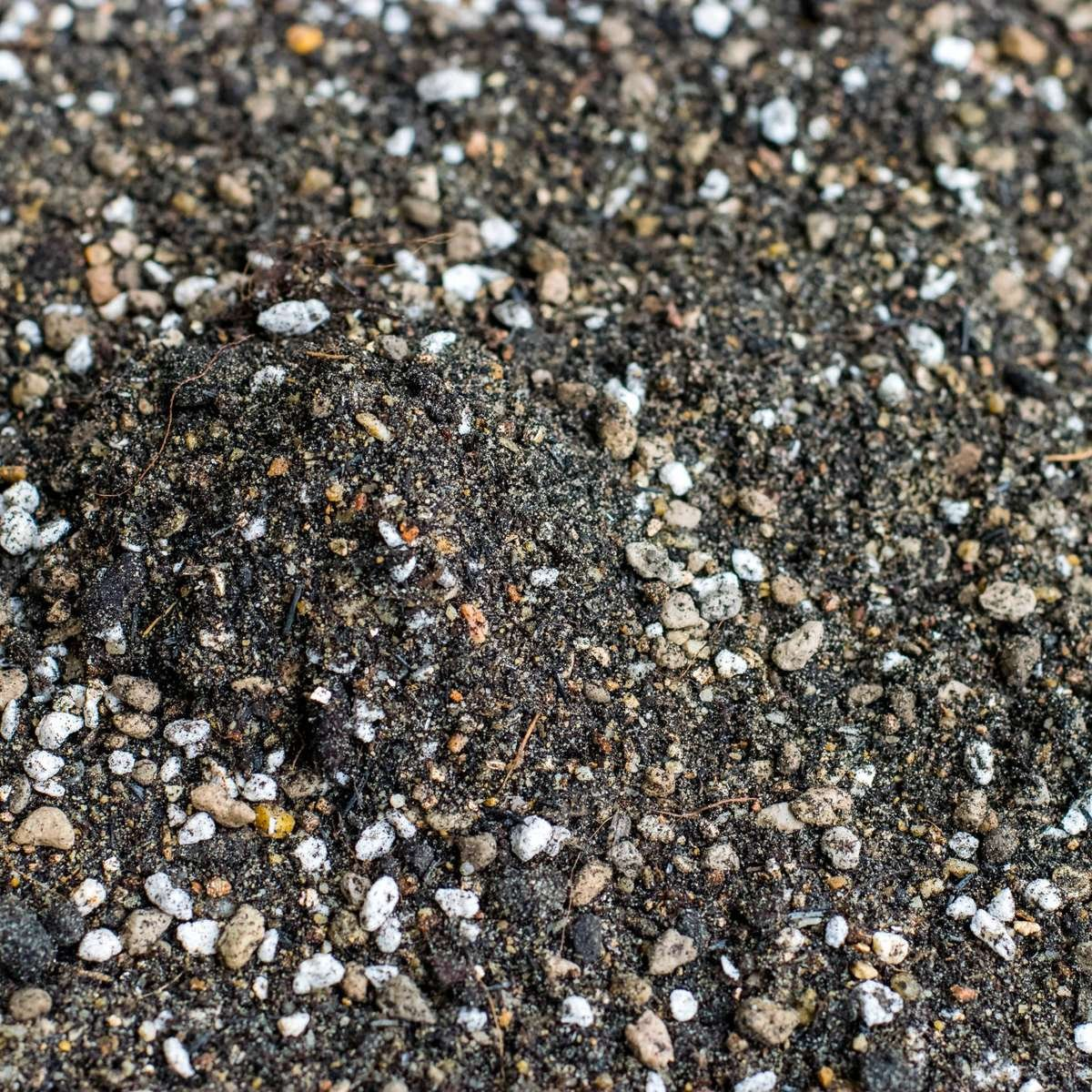 Lava Rock in Soil