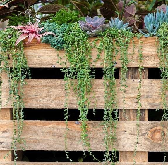 Succulents planted on top or a wooden pallet
