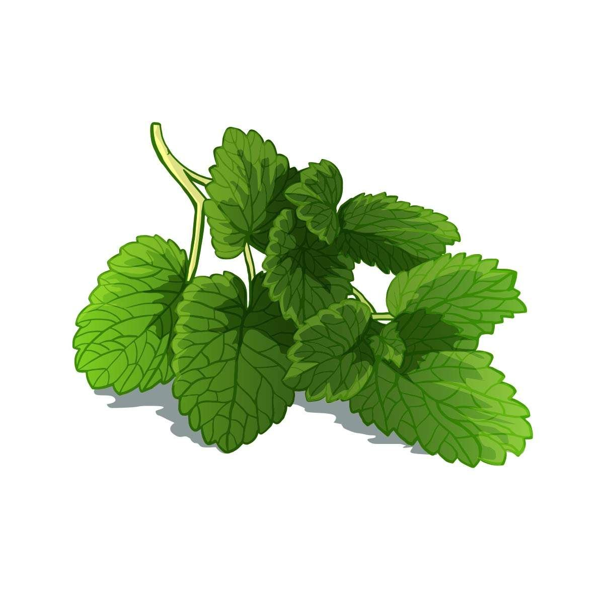 Work Juice Herbal Adaptogen Bulgarian Lemon Balm Extract