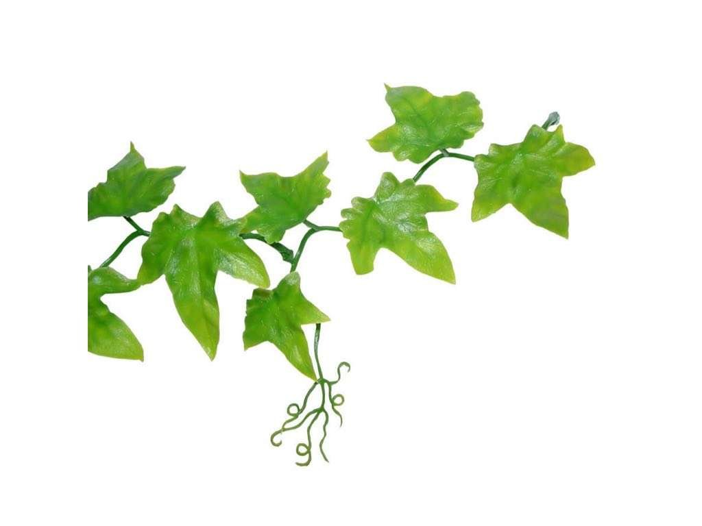 Ivy extract boosts circulation
