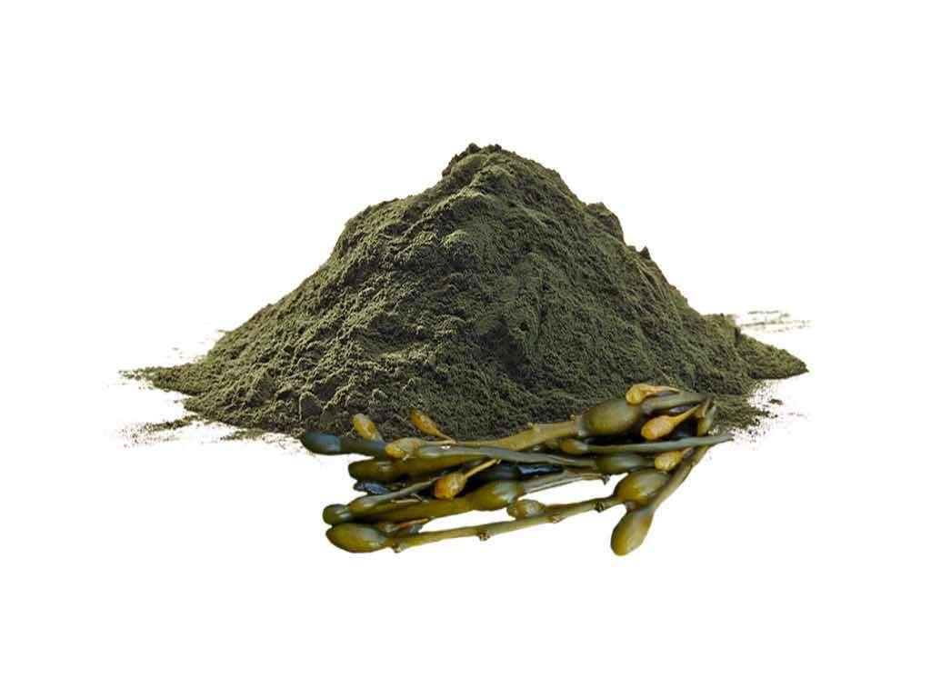 seaweed reducing cellulite on legs naturally