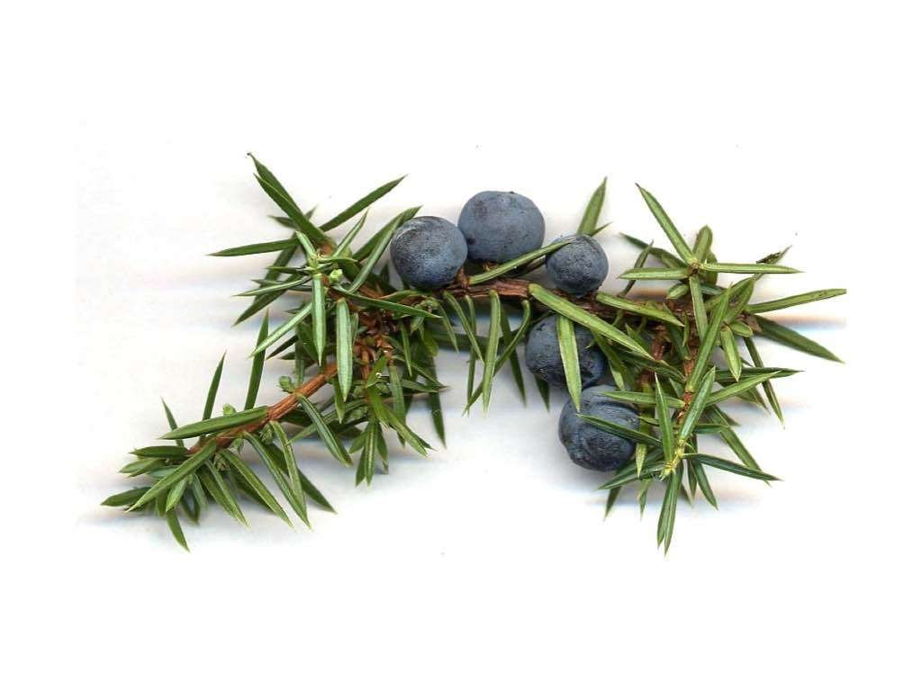 juniper oil to reduce cellulite naturally