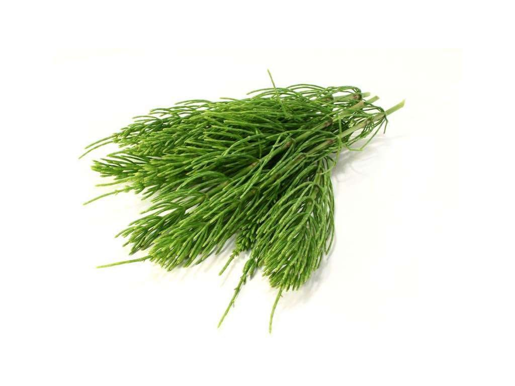 horsetail to reduce cellulite naturally