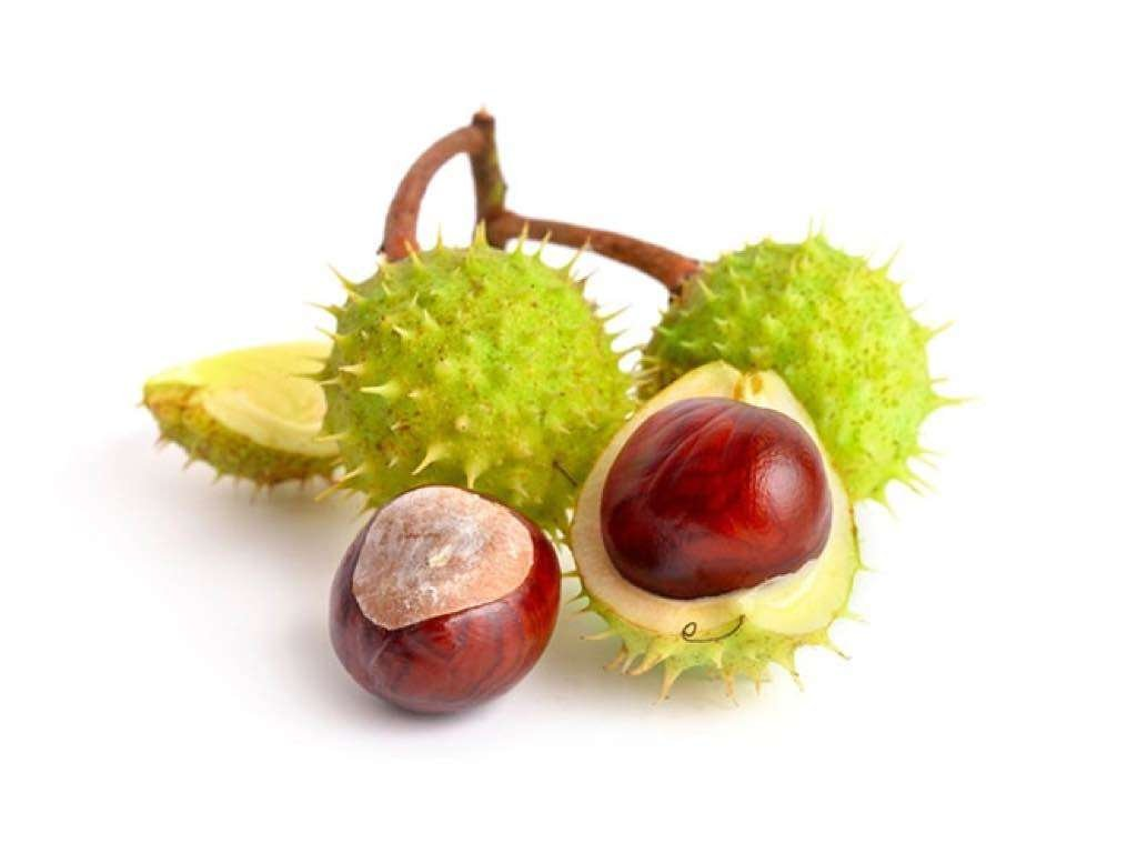 horse chestnuts protect vessel