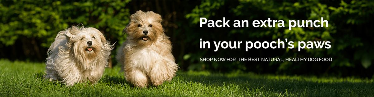 Pick the best natural & healthy dog food in the UK