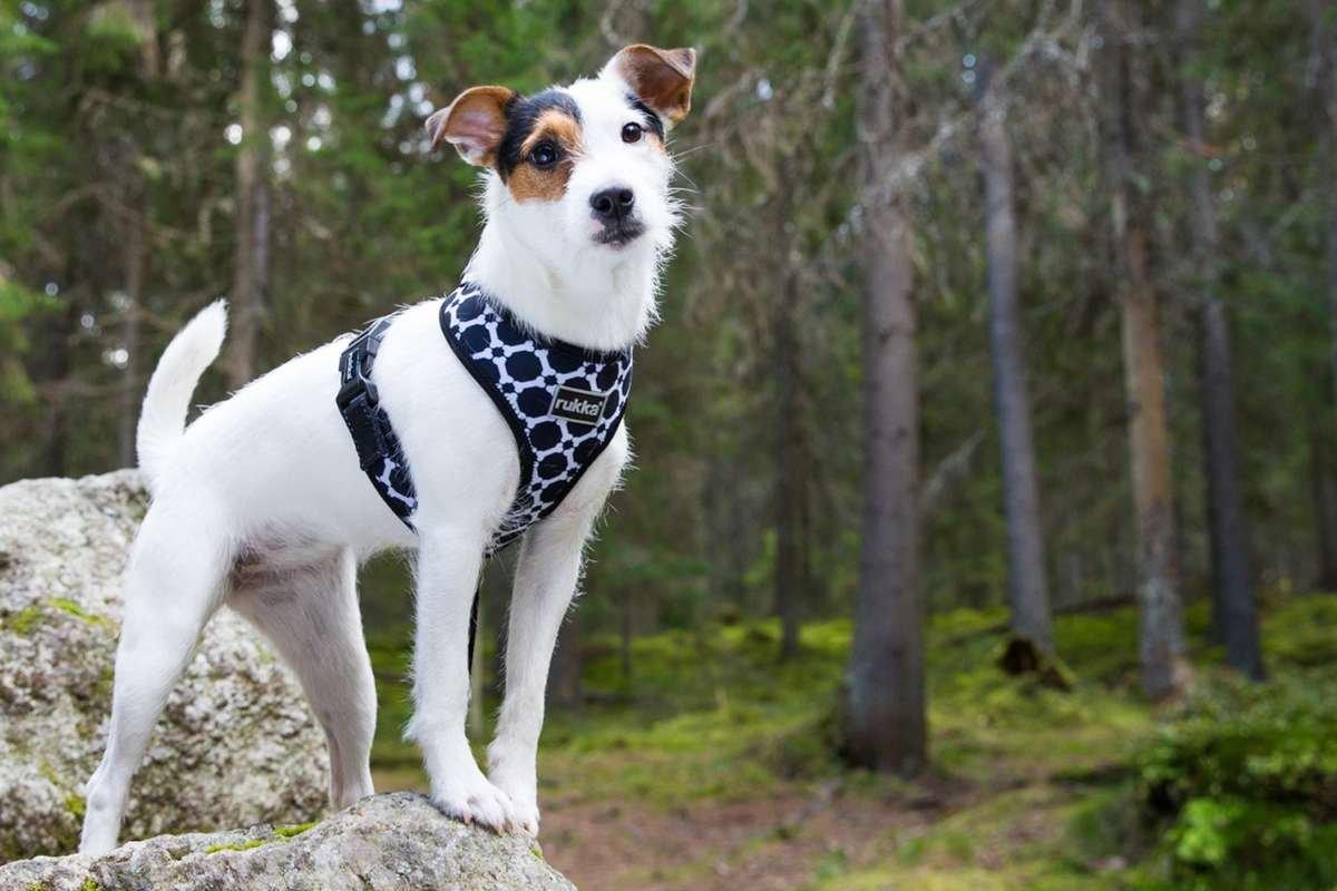 Rukka Dog Harness