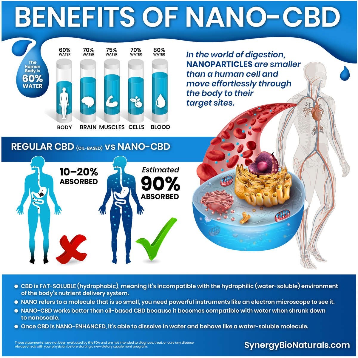 An infographic on nano-CBD that visually communicates the absorbability of nano-enhanced CBD using an abstract human outline with an artery extended from the body and blood cells circulating amidst small nano-sized water droplets.