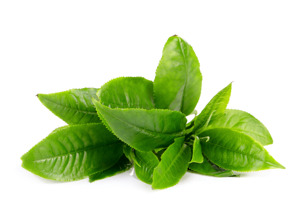 Green tea leaves against a white background.