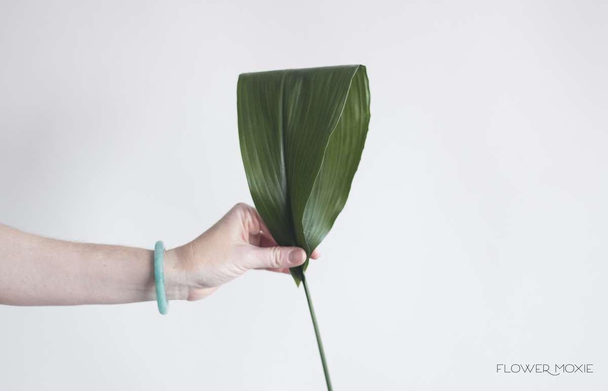 Aspidistra leaf, palms, flower moxie