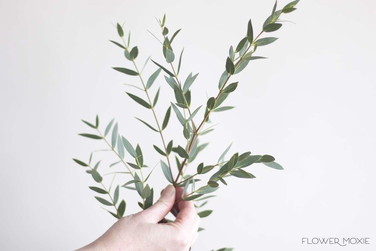 gunni eucalyptus, gunni, flower moxie, diy wedding flowers