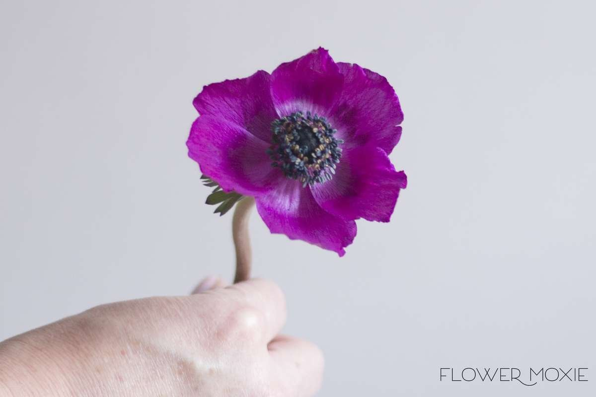 purple anemone, flower moxie, moxie bride