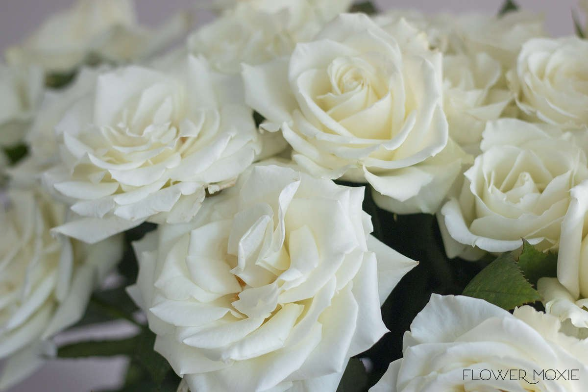 Escimo rose | white rose | white standard rose| DIY flowers | DIY bride | DIY wedding | DIY florist | DIY bridesmaid bouquet | DIY bridal shower | DIY wedding decorations | DIY bridal bouquet | white wedding | boho bride