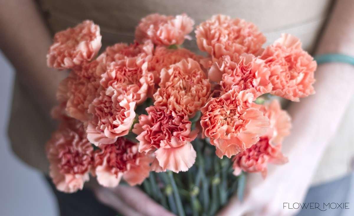 apricot carnation, peach carnation, orange carnation