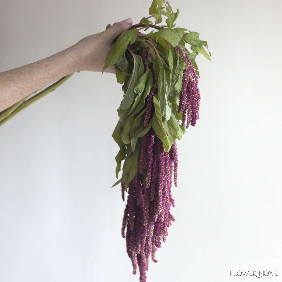 Hanging amaranthus, amaranthus hanging, burgundy wedding palette, fall wedding colors, diy bride, diy flowers, diy bouquet, diy wedding, diy wedding ideas, flower moxie, what does a bikini rose look like, wedding ideas, make your own bouquet, make your own wedding bouquet, flower moxie