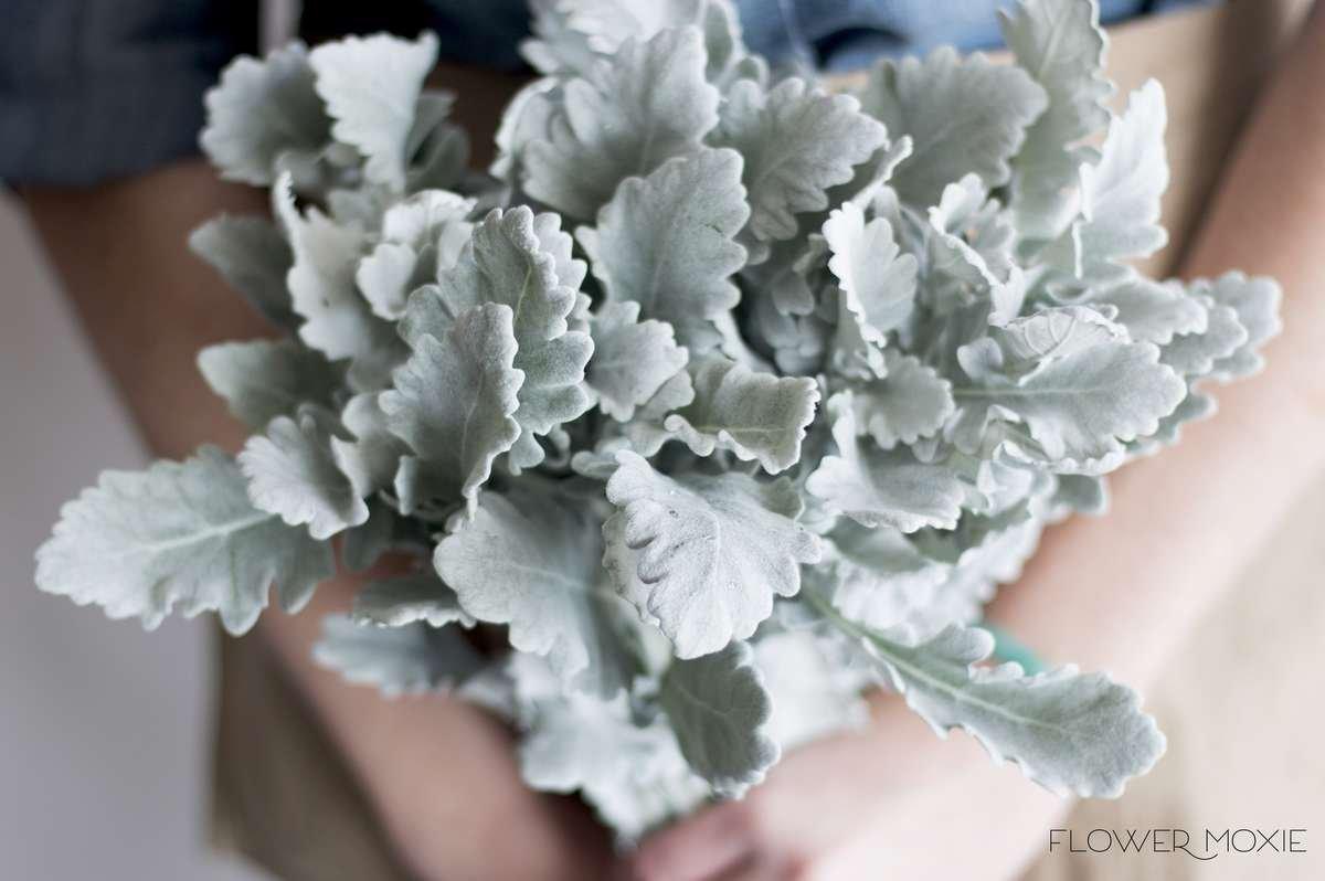dusty miller | greenery | DIY bride | DIY flower ideas | DIY wedding ideas | DIY bouquet ideas | DIY bridesmaid | DIY bridal bouquet ideas | flower moxie