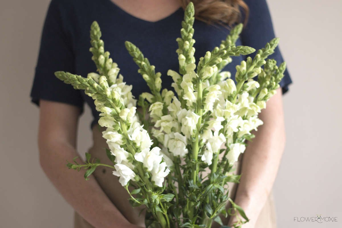 White snapdragons, cream snapdragons, cream white wedding colors, snapdragon, ways to save money with wedding flowers, diy bride, diy flowers, diy bouquet, diy wedding, diy wedding ideas, flower moxie, what does a bikini rose look like, wedding ideas, make your own bouquet, make your own wedding bouquet, flower moxie