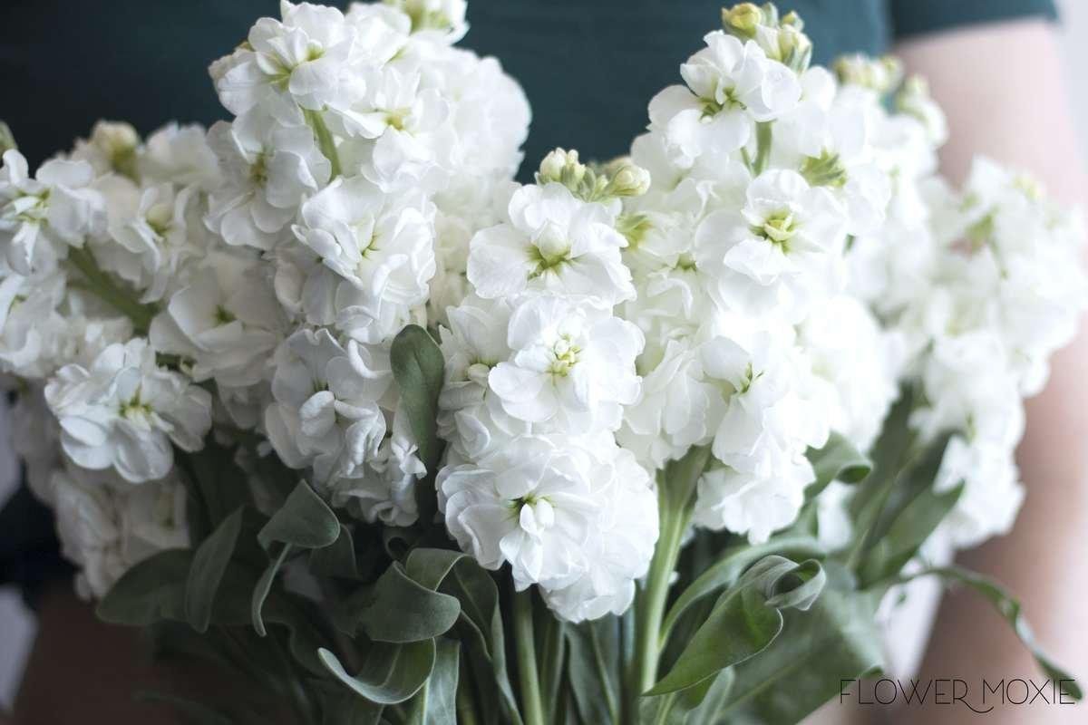 white stock, flower moxie, moxie bride, diy wedding flowers, diy bride
