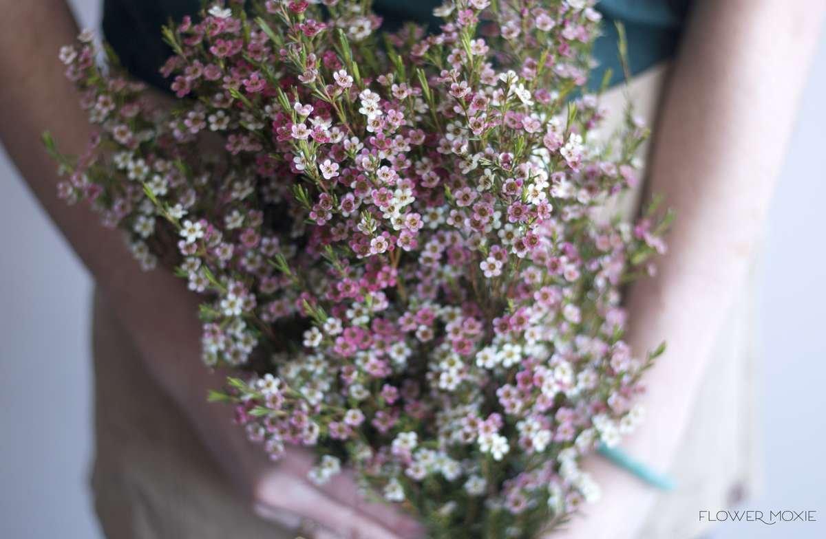 light pink wax flower, wax flower bouquet, wild flower bouquet, flower moxie