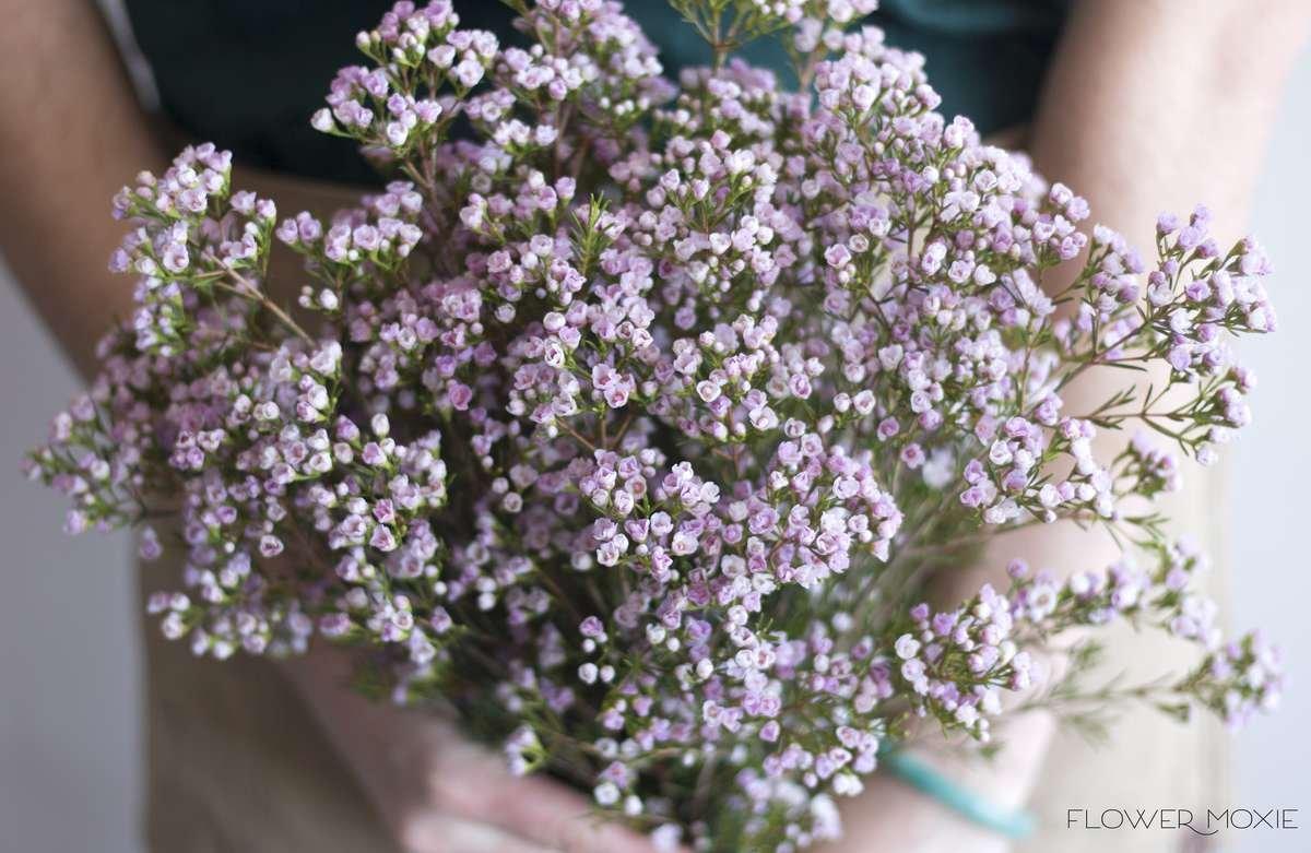lavender wax flower, wax flower bouquet, wild flower bouquet, flower moxie