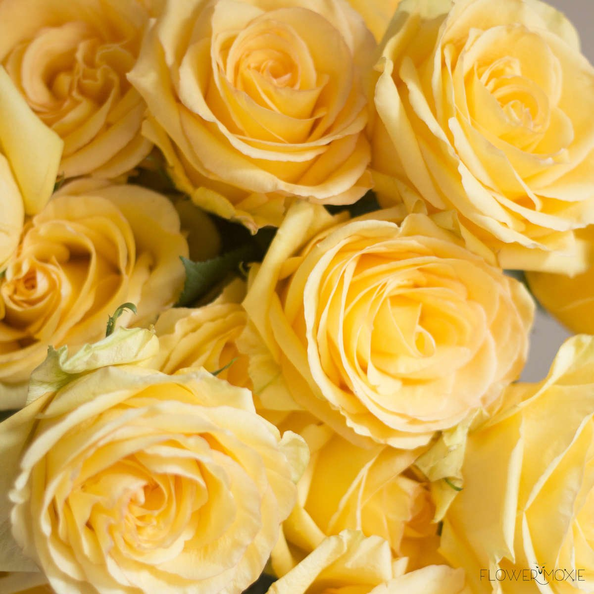 deja vu rose, yellow rose, bright rose, happy rose, flower moxie, DIY bride, DIY flower ideas, DIY wedding ideas, DIY bouquet ideas, DIY bridesmaid , DIY bridal bouquet ideas