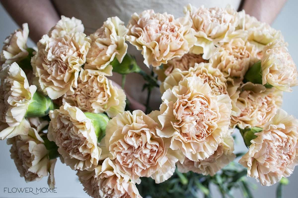 terracotta carnation, dusty pink carnation, flower moxie