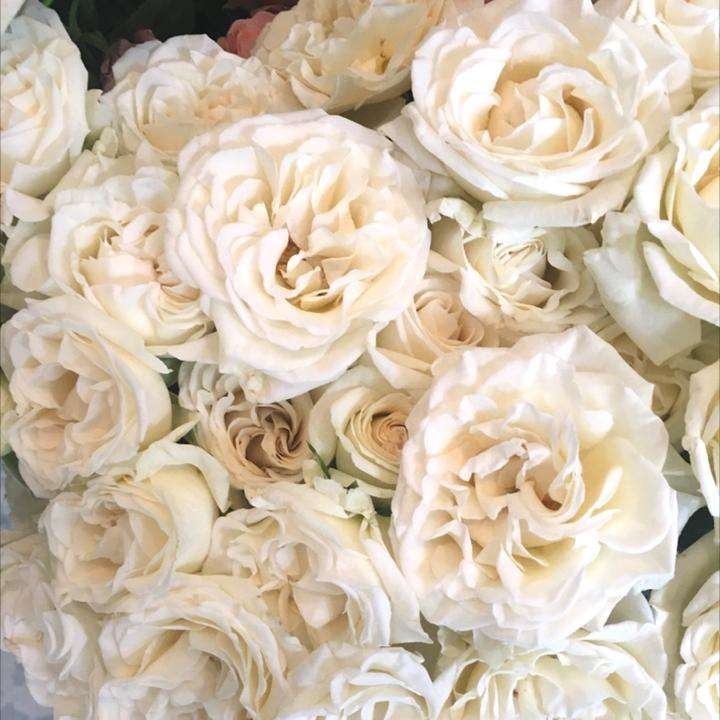 cream spray rose, white spray rose, majolika spray roses, white lady spray roses, spray rose bouquet, Flower Moxie, diy bridal bouquet