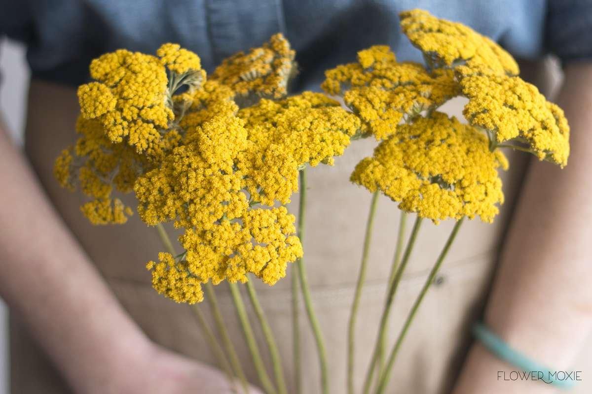 yarrow, yellow yarrow, wild flower bouquet, wild flower centerpiece, flower moxie