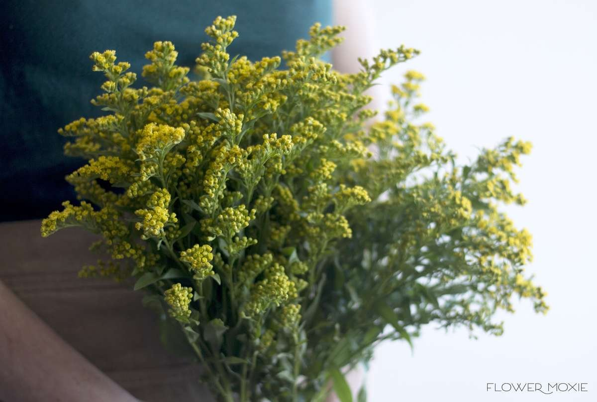 solidago, yellow solidago, flower moxie, moxie bride, diy wedding flowers