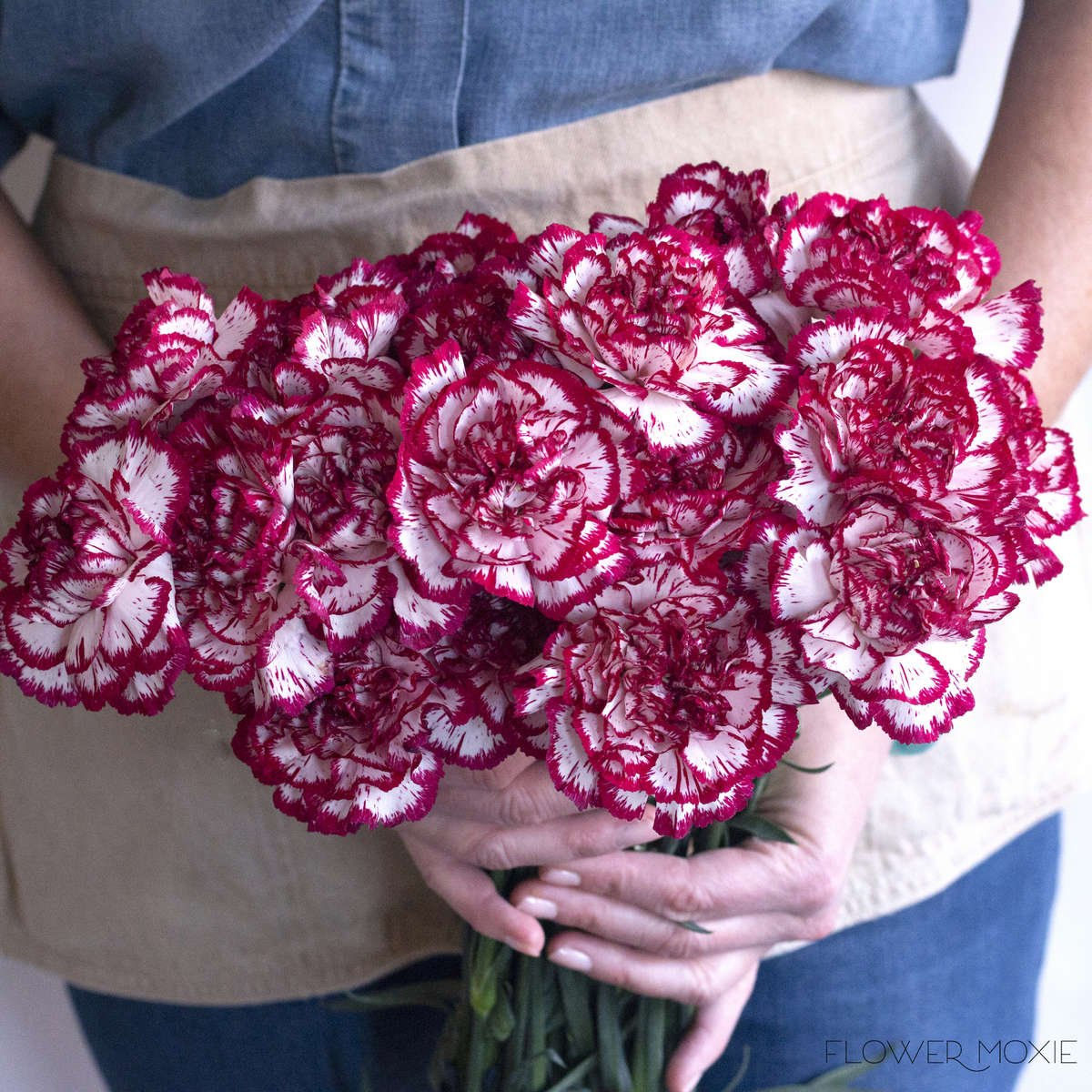 red white carnation,, two color carnation, dual tone carnation, bitonal carnation, diy bride, flower moxie, diy wedding, wedding bouquet ideas, affordable wedding flowers, baby shower ideas, baby shower diy, diy baby shower, bridal luncheon ideas, host a bridal shower, host a bridal luncheon, bridal shower ideas, bridal shower flowers cheap