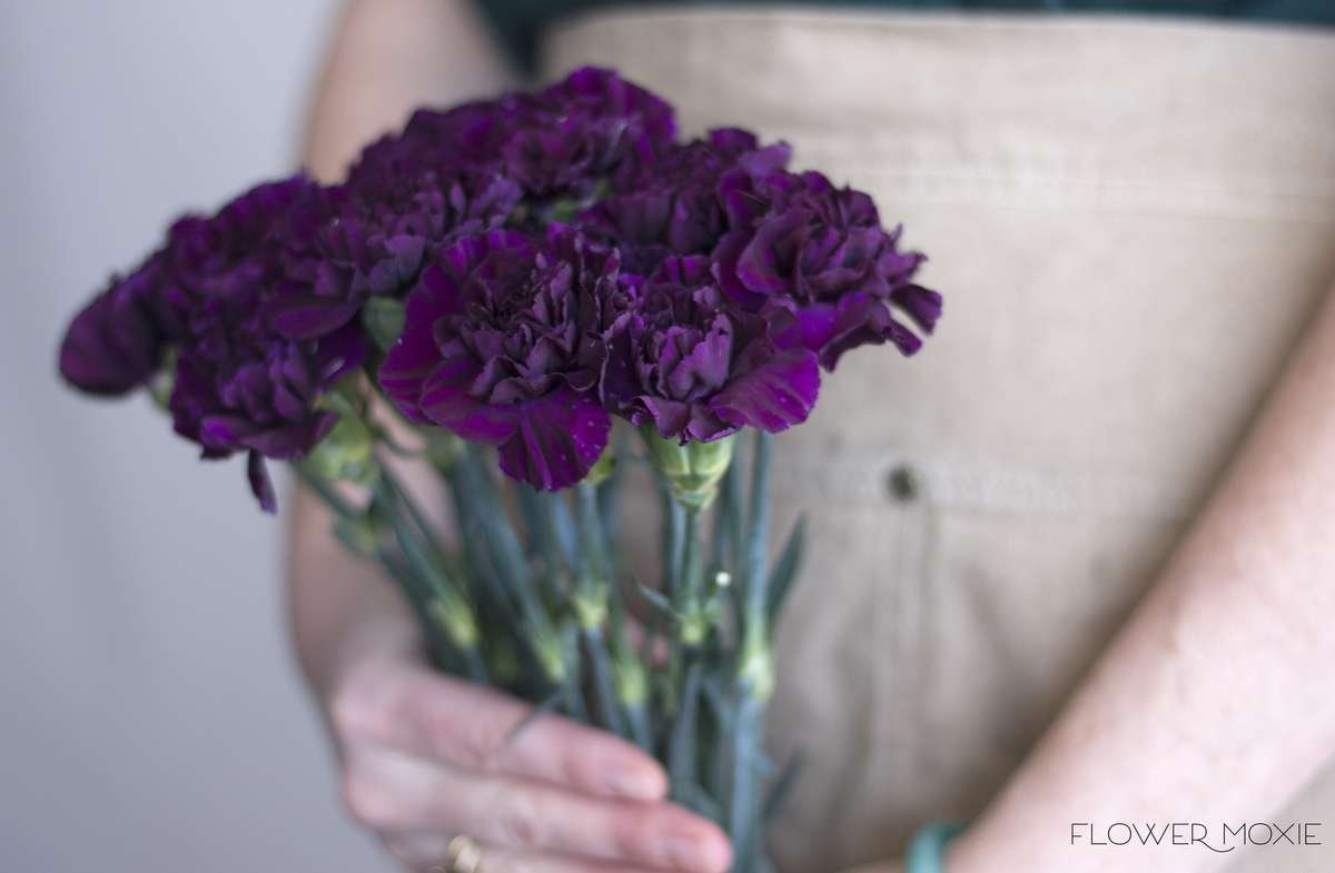 dark purple carnations