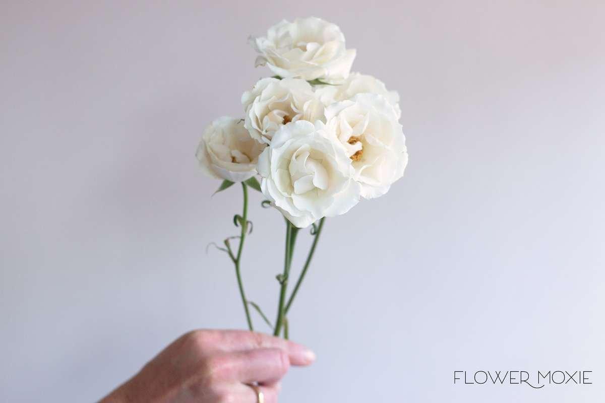 cream spray rose, white spray rose, majolika spray roses, white lady spray roses, spray rose bouquet, Flower Moxie, diy bridal bouquet