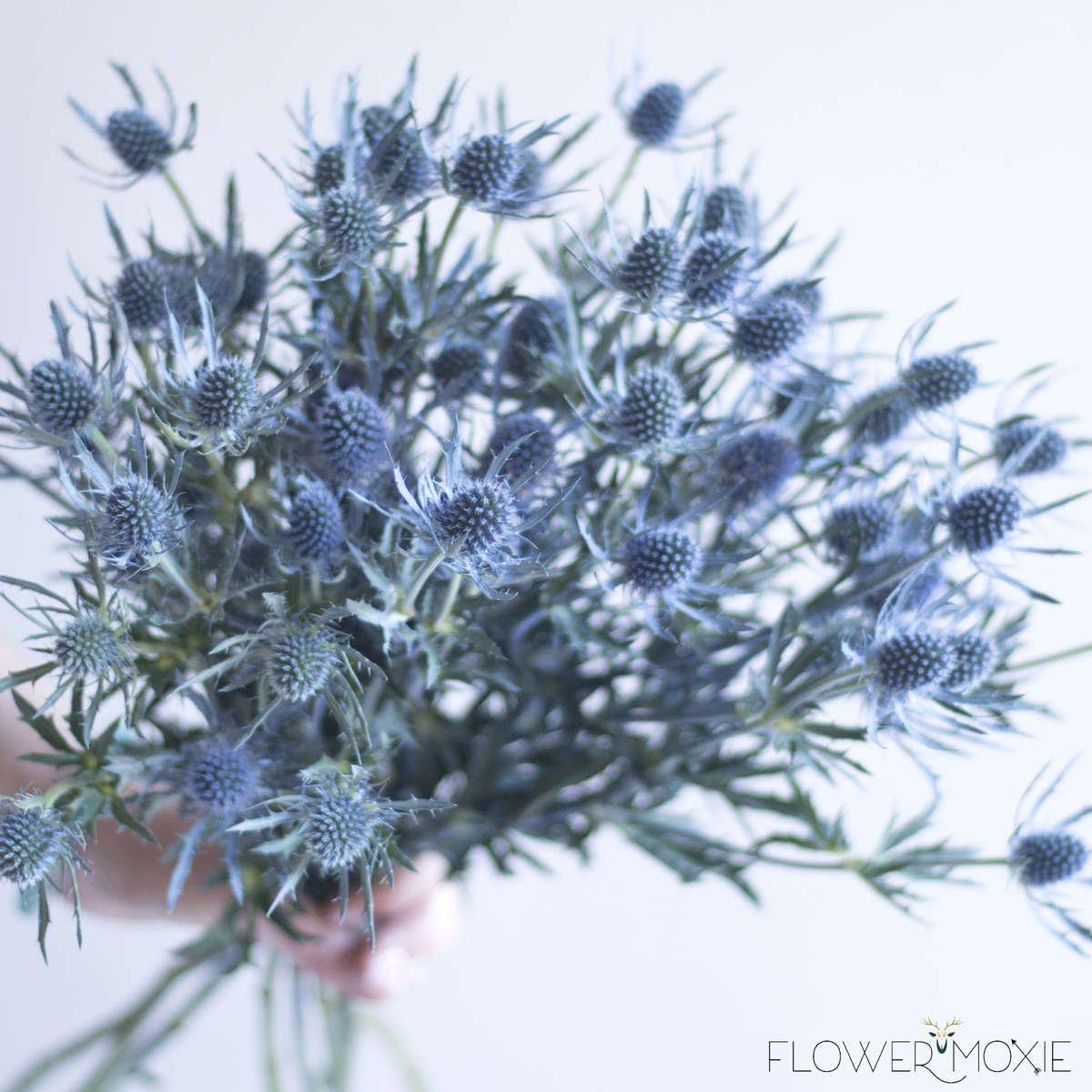 Thistle — Flower Moxie