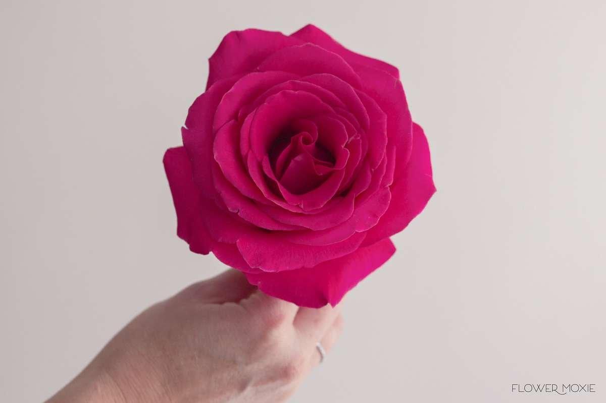 Pink floyd flower moxie pink floyd mightylinksfo