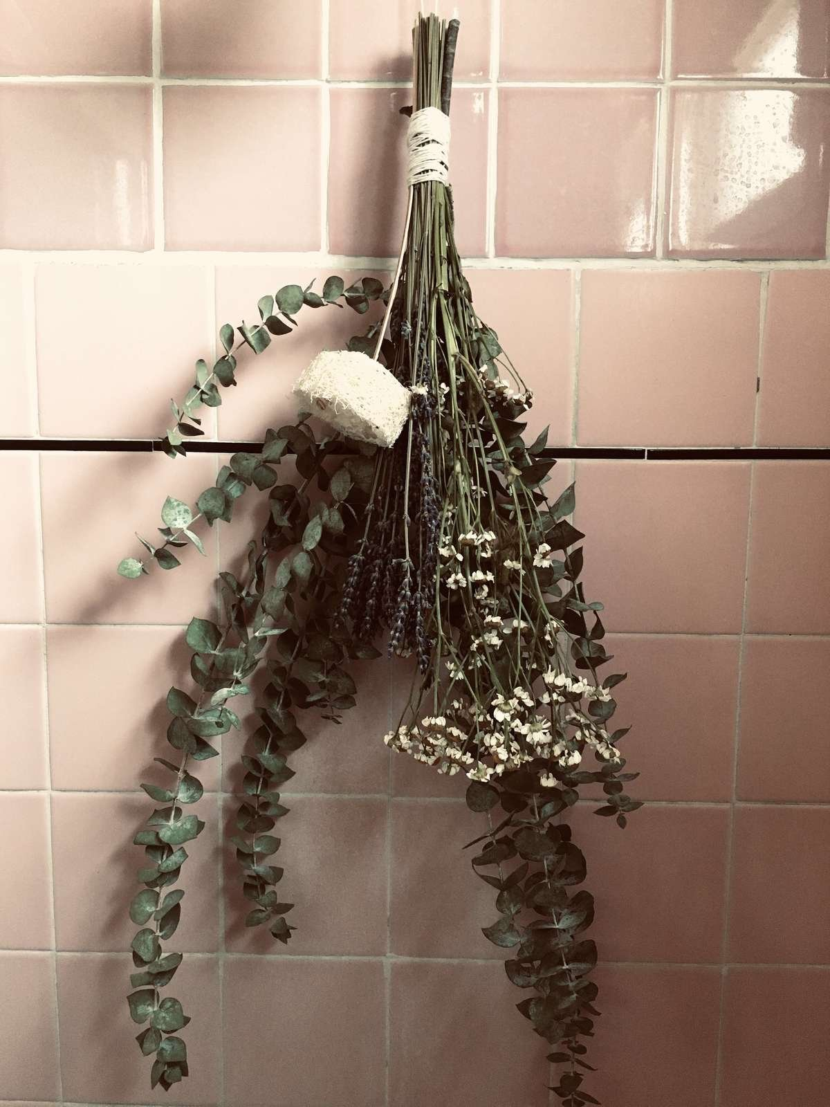 Where to Buy Eucalyptus for Shower