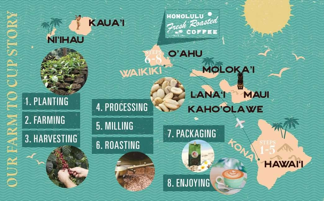 A chart showing the process of bringing our Kona coffee from our farm to our roasting facility in Waikiki