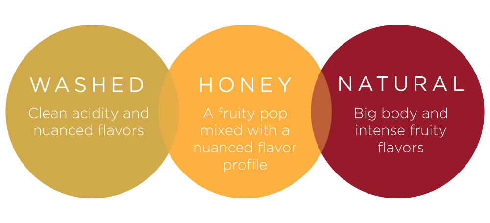 Washed coffee offers clean acidity, honey coffee offers a little fruitiness, and natural coffees offer big body and fruity flavors