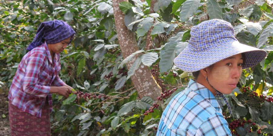 Producers in Myanmar