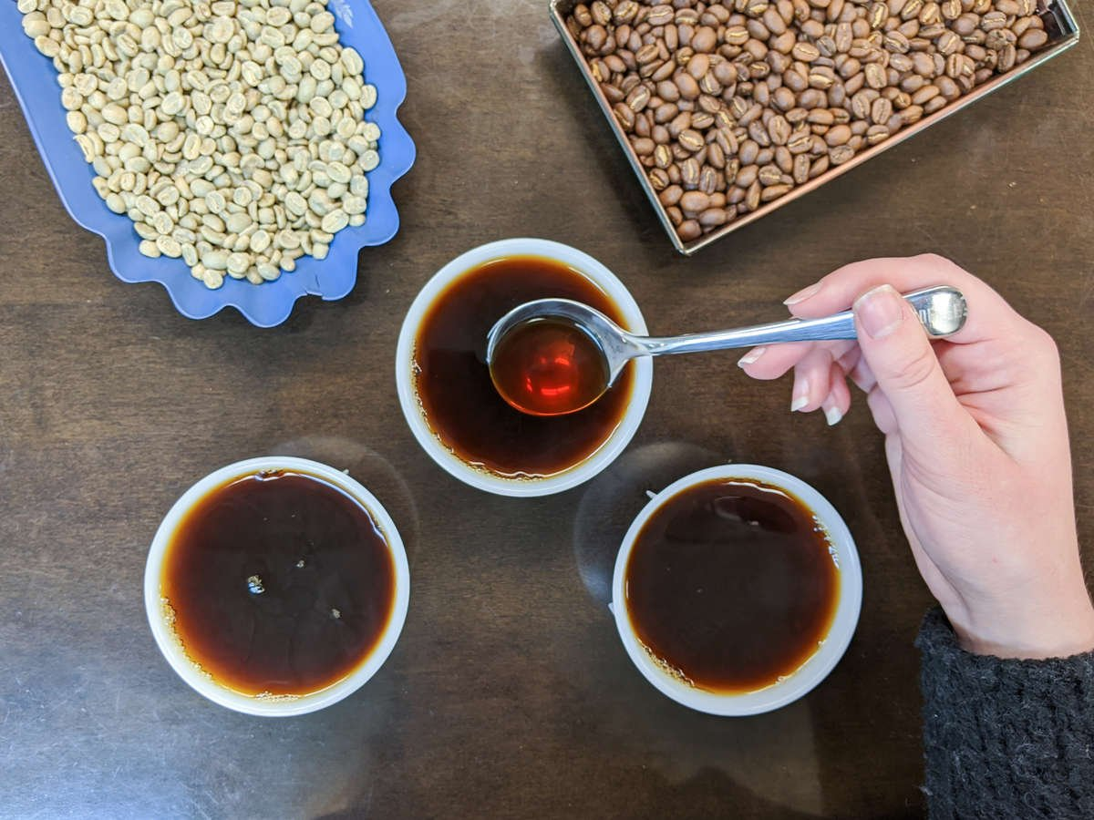 Cupping Fresh Roasted Coffee in our Cupping Room in St. Louis, MO