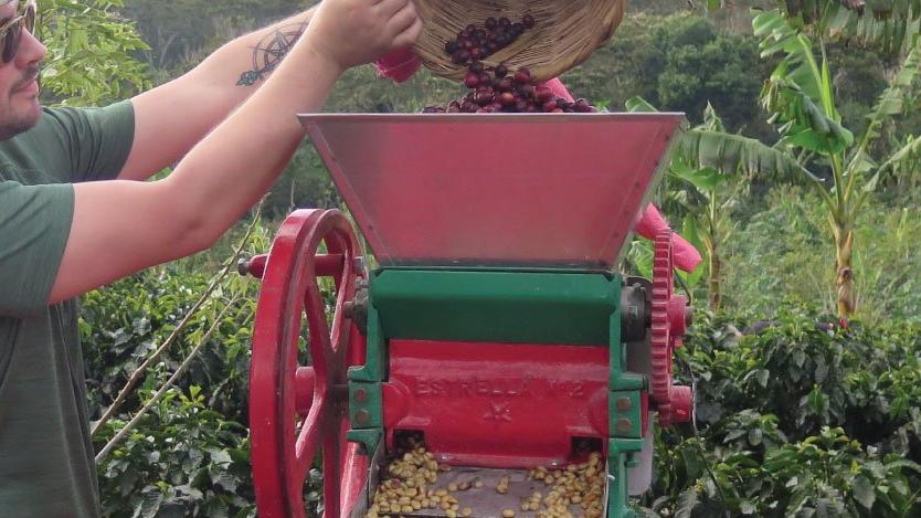 Processing Coffee Cherries at Origin